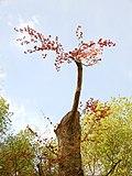 The tree is alive.jpg