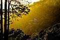 The way of golden light.JPG