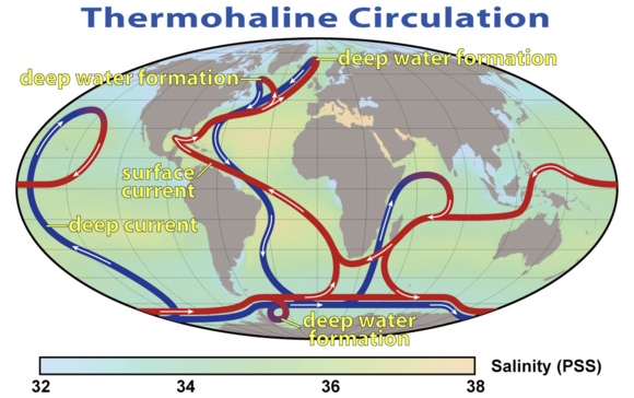 This map shows the general location and direction of the warm surface (red) and cold deep water (blue) currents of the thermohaline circulation. Salinity is represented by color in units of the Practical Salinity Scale. Low values (blue) are less saline, while high values (orange) are more saline. Thermohaline Circulation 2.png