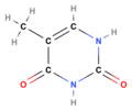 Thymine (structural formula).png