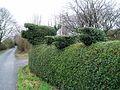 Topiary pigs - geograph.org.uk - 65148.jpg