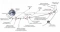 Transit-Terre-Lune-Surveyor-fr.png