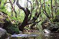 Tree1232414.jpg