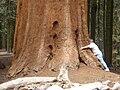 TreeHugger.JPG