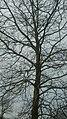 Tree (47587240082).jpg