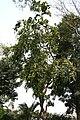 Tree I IMG 2812.jpg