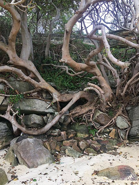 File:Tree branches and roots.jpg