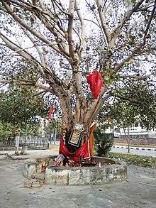 Trees In Mythology Wikipedia