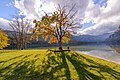 Trees in Bohinj 2015.jpg