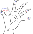 Trigonometry - angles with the hand.png