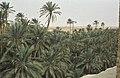 Tunis1960-001 hg.jpg