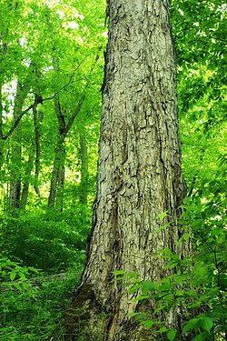 Twin Sisters Trail (14) (14092717698).jpg