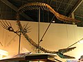 Tylosaurus (side angle).jpg