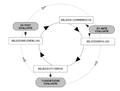 Type beleidsevaluatie - type of policy evaluation.png