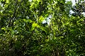 USAID Measuring Impact Conservation Enterprise Retrospective (Philippines; Nagkakaisang Tribu ng Palawan) (39395439285).jpg