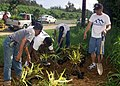 US Navy 030424-N-6404B-003 Mess Specialist 1st Class Wilfred Linatoc from Quezon, Philippines directs shipmates in the placement of new tropical plants along the main thoroughfare in the town of Garapan.jpg