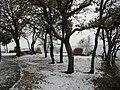 Ulika 21 12 09 sneeuw-Schnee-snow - panoramio - istra1977 (8).jpg