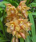 United States Botanic Garden, Washington, D.C., USA3.jpg