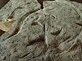 Unknown Ediacaran biota (未知のエディアカラ生物).jpg