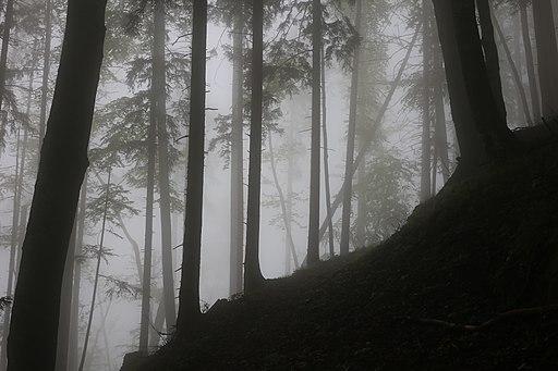 Nationalpark Kalkalpen (UNESCO-Welterbe in Oberösterreich)