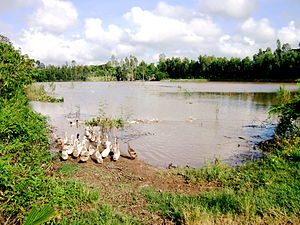 The Amazing Race Canada 4 - In Cái Bè at Vietnam's Mekong Delta, teams participated in a Roadblock involving ducks