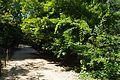 VIEW , ®'s - DigiGraf - Ð - ┼ , MADRID JARDIN-PARQUE CAMPO del MORO - panoramio (4).jpg