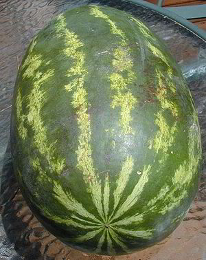 Vampire watermelon.jpg