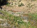 Ved NaturBornholm (2710102676).jpg