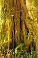 Vegetacion de Bosque Tropical en Costa Rica 007.jpg