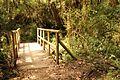 Vegetacion de Bosque Tropical en Costa Rica 034.jpg