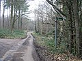 View along road through Covert Wood - geograph.org.uk - 328677.jpg