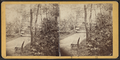 View in Central Park, from Robert N. Dennis collection of stereoscopic views 3.png