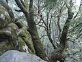 View looking down at tree at Castle Rock State Park in California.JPG