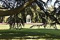 Villa Olmo - Cedro del Libano - ramo.jpg