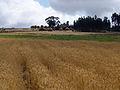 Village au centre de l'Ethiopie (1).jpg
