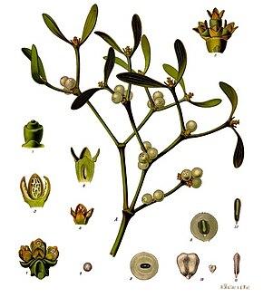 Gui Plante Wikipedia