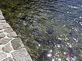 Vylet k Cernemu jezeru Sumava - 9.srpna 2010 117.JPG