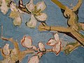 WLANL - jankie - Amandelbloesem (detail), Vincent van Gogh (1890).jpg