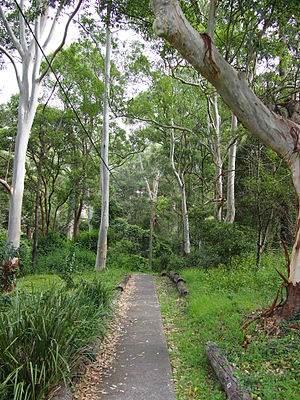 Denistone, New South Wales - A walkway leading into Darvall Park