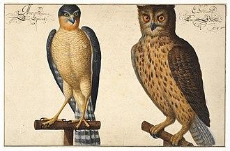 Johann Walter (painter) - Hibou et Crécelle, aquarelle et gouache sur papier (Cabinet des estampes et des dessins de Strasbourg)