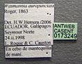 Wasmannia auropunctata casent0173249 label 1.jpg