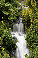 Waterfall, Royal Botanic Garden Edinburgh, Scotland, GB, IMG 3833 edit.jpg
