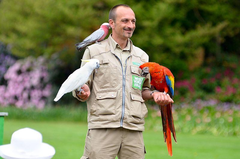 File:Weltvogelpark Walsrode (Flugshow) - panoramio (2).jpg