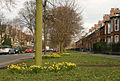 Westbourne Avenue, Hull, in spring - geograph.org.uk - 739973.jpg