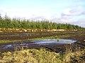 Wetlands at Creggan - geograph.org.uk - 112196.jpg