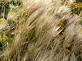 Whiteplants.jpg