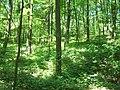Wielkopolski Park Narodowy latem 3.jpg