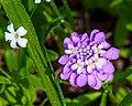 Wild Flowers (27936566173).jpg