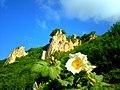Wild rose in Azerbaijan.jpg