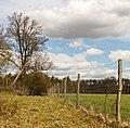 Wildkerend raster. Locatie, Kroondomein 01.jpg
